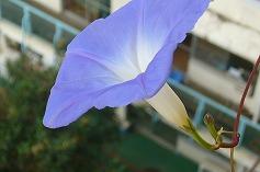 11/18 最後の開花